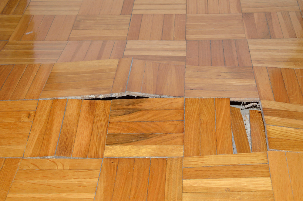 A wood floor restoration specialist can examine your floors for you and make their recommendations.
